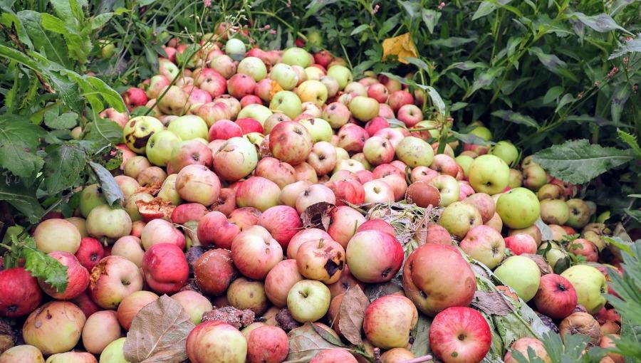 UOKiK nie dostrzega zmowy cenowej na rynku jabłek przemysłowych