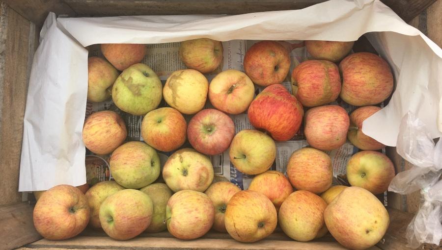 Przymrozki zrobiły swoje. Będzie większy popyt w detalu na jabłka z defektami wizualnymi?