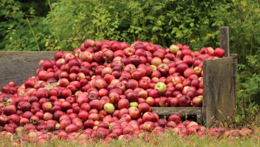 UOKiK po raz kolejny odrzuca podejrzenia zmowy cenowej na rynku owoców przemysłowych