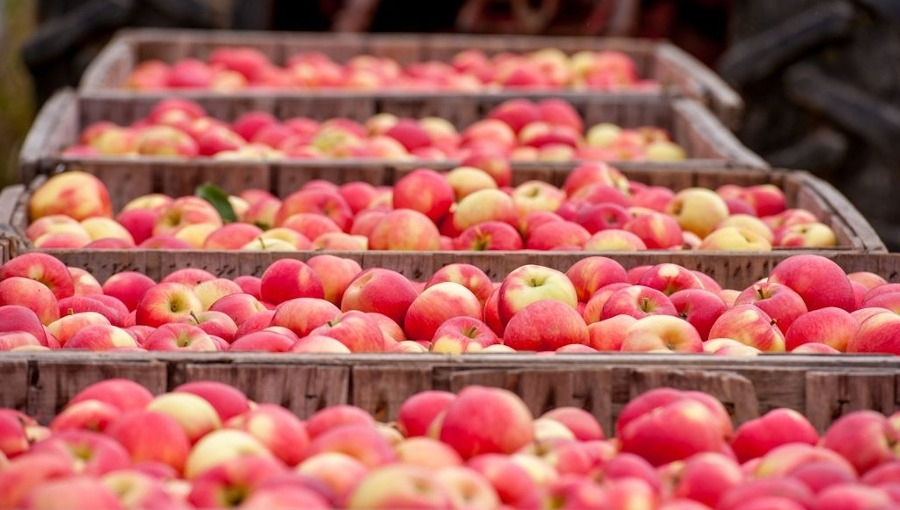 Nie najlepszy okres dla sprzedających jabłka na rynkach hurtowych