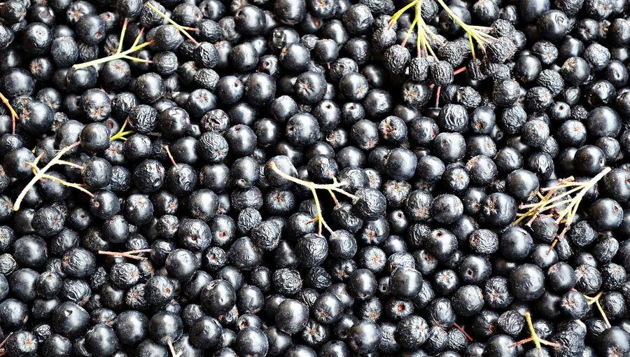 Zbiory aronii 2021 - dobre plony i wysoka jakość owoców, ceny przeciętne