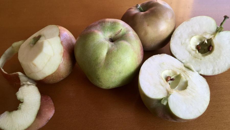 W sprzedaży Ligol, Szampion, Szara Reneta i McIntosh - czy zrywanie niedojrzałych owoców się opłaca?