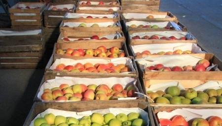 Spadek roli rynków hurtowych na rzecz sieci supermarketów nie jest korzystny dla polskiego sadownictwa