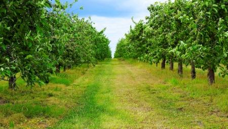 Inflacja - ile naprawdę kosztuje polskich sadowników?