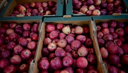 WAPA informuje o stanach magazynowych jabłek w polskich i europejskich chłodniach