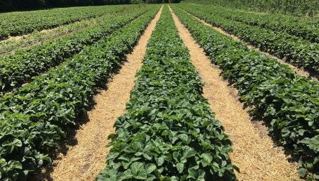 Wzrósł dochód rolników z hektara przeliczeniowego