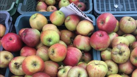 Czy mieszanie w sklepach różnych odmian owoców ma negatywne skutki?