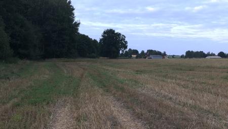 Co dalej z obrotem państwową ziemią rolną?