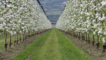 Grozi nam nadprodukcja żywności ekologicznej? - jak Unia planuje wspomagać rolnictwo ekologiczne