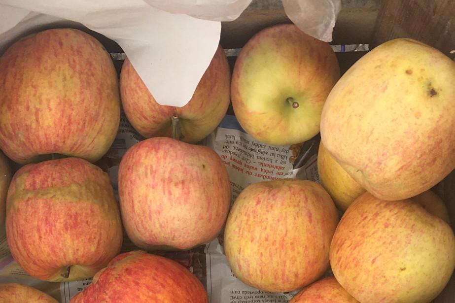 Jabłka odmiany Piros.