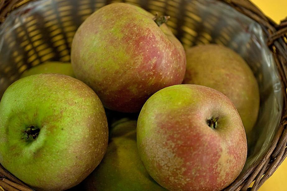 Jabłka odmiany Piękna z Boskoop.