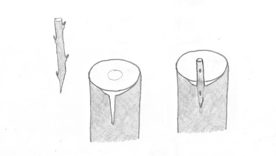 Kożuchówka